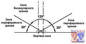 Зоны бинокулярного и периферийного зрения