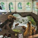 Медведи!!!