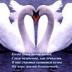 Самые верные птицы