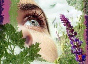 Лекарственные травы для уменьшения морщин на веках вокруг глаз