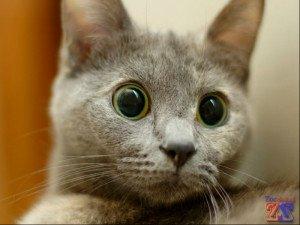 Большие глаза так привлекательны, не правда ли?'