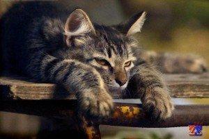 Подавленное состоянии кота тоже говорит о его недомогании