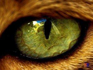 Как лечить слезливость глаз