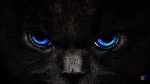 Фото синеглазого кота