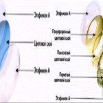 Расположение слоев цветной КЛ