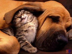 Собаки и кошки тоже страдают глаукомой