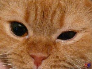 Разный размер зрачков у кот