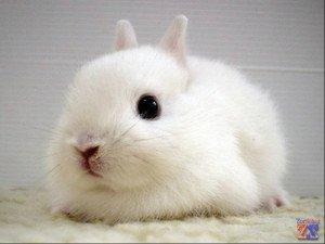 Коньюктивит у кроликов - причины, симптомы и лечение