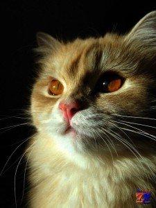Как устроено зрение у кошек