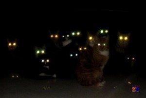 """""""Прожектора"""" у кошек: жутковатое свечение"""