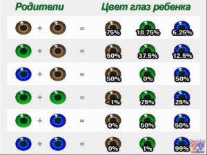 Таблица для определения цвета глазок у будущих детей