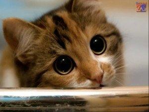Работу зрачков хорошо показывают кошки