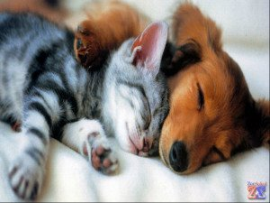 Собаки и кошки тоже болеют кератитом