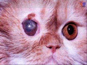 Вид язвы у котов