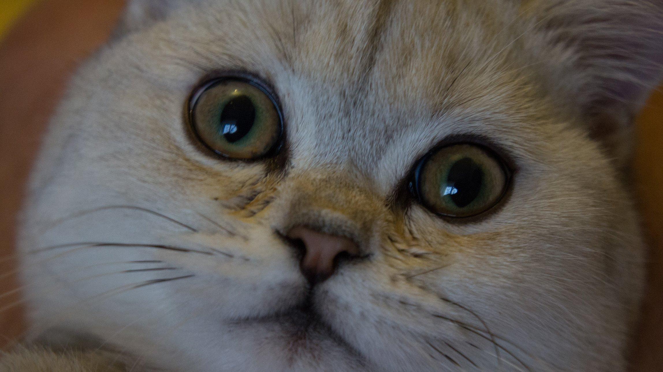 Пусть у кошки тоже не болеют глазки…