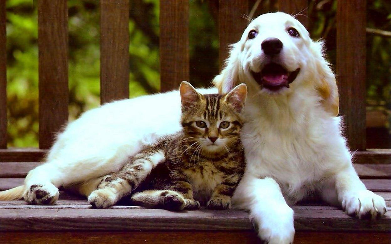 А ведь собаки и кошки живут более правильно…